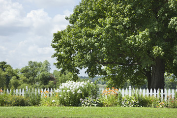 White picket fence with flowers in front of a big tree