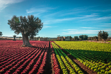 Colorful landscape in Puglia
