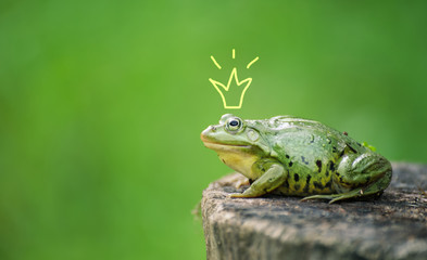 Foto op Plexiglas Kikker Cute frog princess or prince. Toad painted crown, shooting outdoor