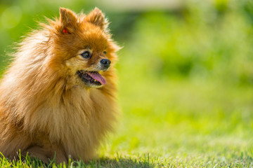 Small dog in summer meadow
