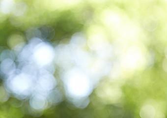 Blur green bokeh