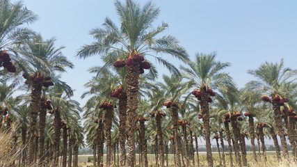 planting dates