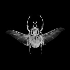 Insect in negative & black and white