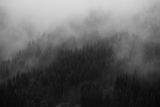 Landscape Foggy Forest Norway