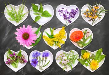 Alternativmedizin mit Heilpflanzen 2