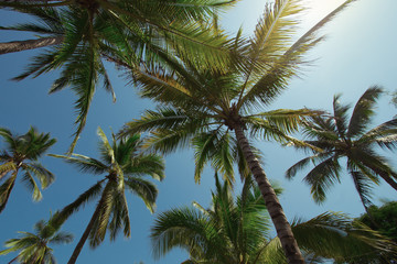 Unspoiled Beach Palms