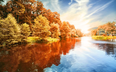 Autumn forest on the river bank