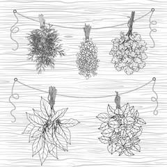 Monochrome bundles of  flavoring  herbs.