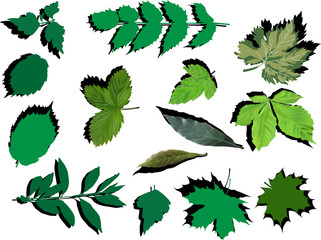 set of green leaves with shadows on white