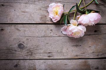 Fresh pink peonies flowers on aged wooden background. Flat lay.