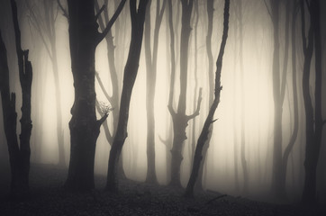 spooky twisted trees in misty forest