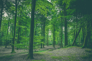 Green forest scenery with green leaves