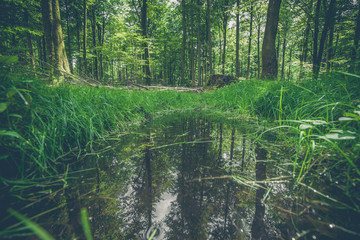 Forest puddle with water reflection