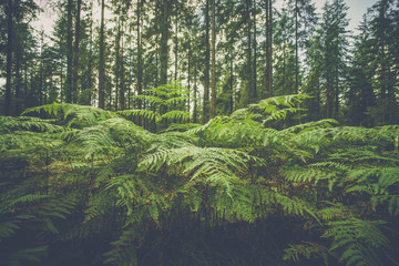 Large fern plants in a forest
