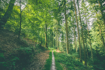 Small forest trail in a green forest