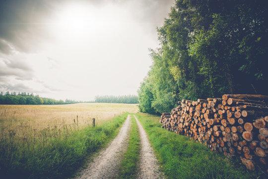 Wooden logs by a roadside