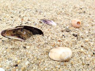 모래위에 조개껍데기
