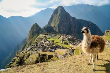 Fototapeten Lama Lama And Machu Picchu