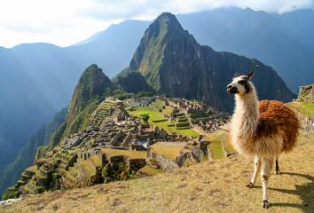 Poster Lama Lama And Machu Picchu