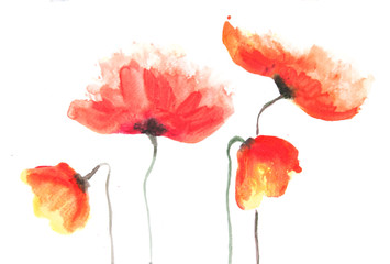 Red poppy flowers on white, acrylic color painting, impressionism style