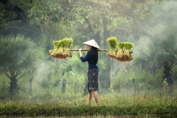 Woman Farmers grow rice in the rainy season. They were soaked with water and mud to be prepared for planting. wait three months to harvest crops