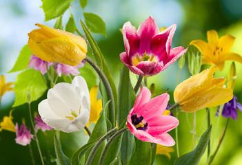 Obraz image of beautiful flowers in the garden closeup - fototapety do salonu