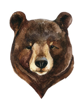 Bear head watercolor