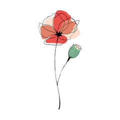 Poppy flower and capsule