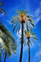 Wyniosłe palmy na tle błękitnego nieba