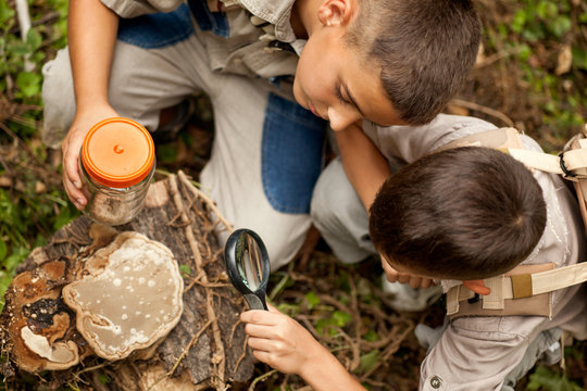 Young boys on a camping investigated nature using magnifying gla