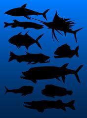 set of predatory fish