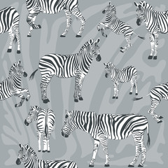 Seamless pattern with wild zebra