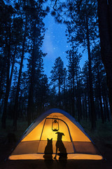 Wall Mural - Dog and Cat Camping Under Stars
