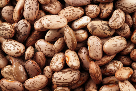 Pinto Beans Close Up