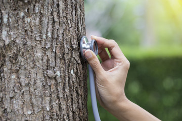 woman hand listens to a tree with a stethoscope, concept love th