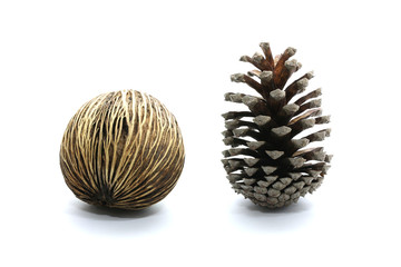 Suicide tree seed, Pong pong seed or Othalanga,Cerbera oddloam's seed together with cone pine-tree isolated on white background