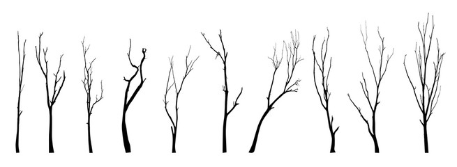 vector black silhouette of a bare tree Wall mural