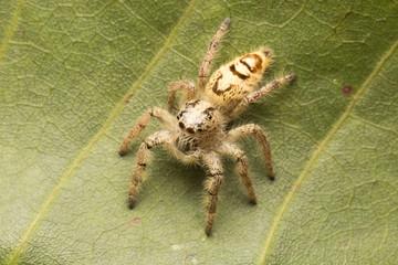 Macro small spider
