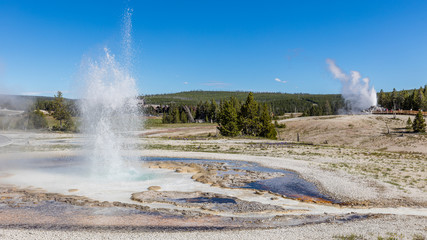 Erupting geyser with steam. Amazing landscape of the park. Upper Geyser Basin, Yellowstone National Park, Wyoming