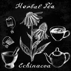 Echinacea botanical illustration