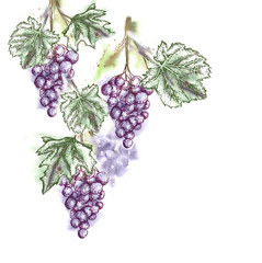 Watercolor Grape Twig