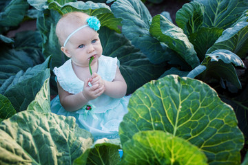 baby sits in cabbage
