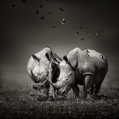 Fotobehang Neushoorn Two Rhinoceros with birds in BW