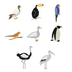 Cartoon birds vector set