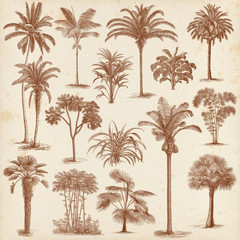 Vintage hand drawn palm trees set