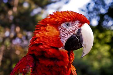 Попугай , parrots ,Parrots Court ,Colorful parrot ,beautiful parrots,parrots looking,parrots sitting,animals,big parrots,