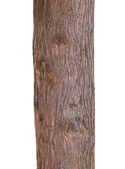 Tree trunk texture isolated on white, pine wood background