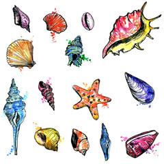 watercolor set of shells
