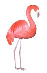 Pink flamingo isolated