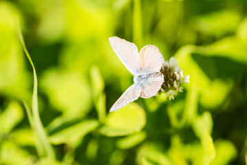 butterfly on meadow plants